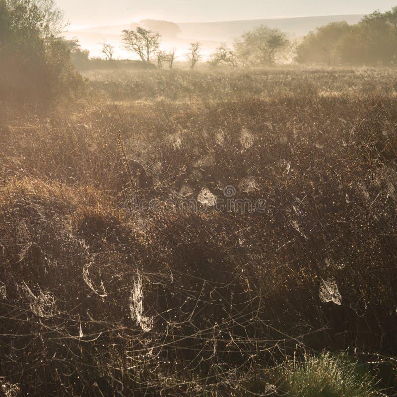 Aturdindo o fulgor alaranjado do nascer do sol outonal com as condições enevoadas na paisagem de Dartmoor fotos de stock royalty free