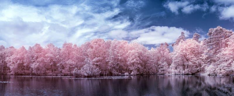 Aturdindo a paisagem infravermelha do verão da cor falsa surreal do lago e da floresta no campo inglês imagens de stock royalty free