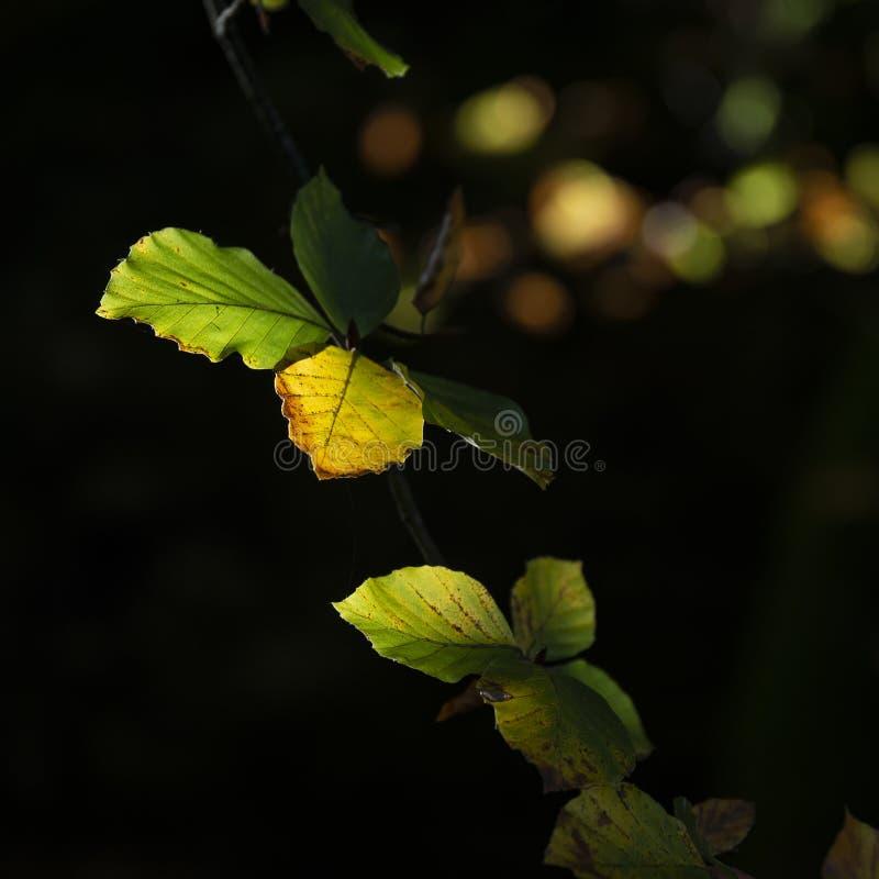 Aturdir la imagen del detalle de las hojas vibrantes de Autumn Fall en magnífico imagenes de archivo