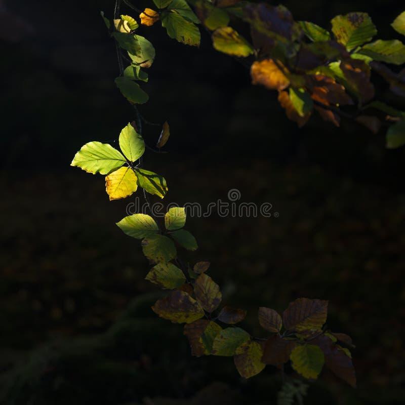 Aturdir la imagen del detalle de las hojas vibrantes de Autumn Fall en magnífico foto de archivo
