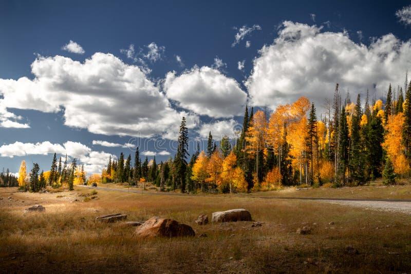 Aturdir la opinión del otoño de la carretera con los árboles de pino increíbles y del follaje de otoño monumento nacional a las r foto de archivo libre de regalías