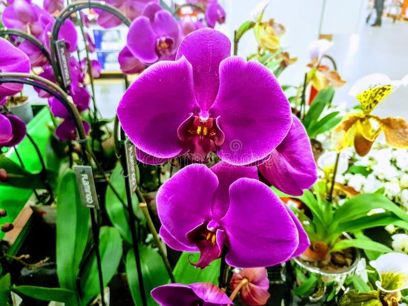 Aturdir las plantas azules de las orquídeas de la lila foto de archivo libre de regalías