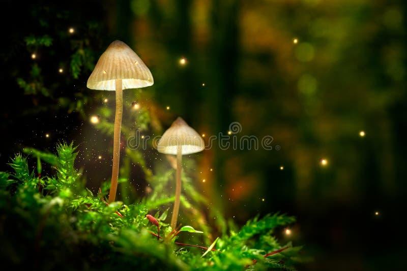 Aturdir setas en musgo y luciérnagas en bosque en la oscuridad fotografía de archivo
