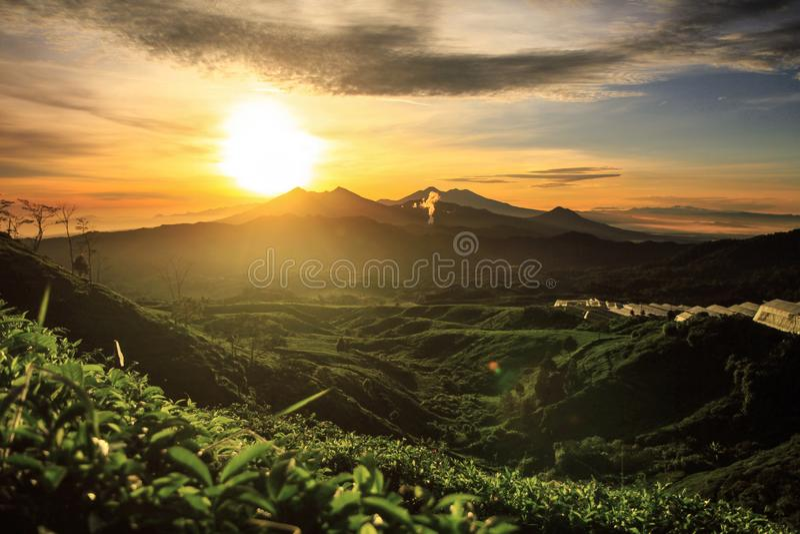 Aturdir vistas de colinas verdes de oro fotos de archivo libres de regalías