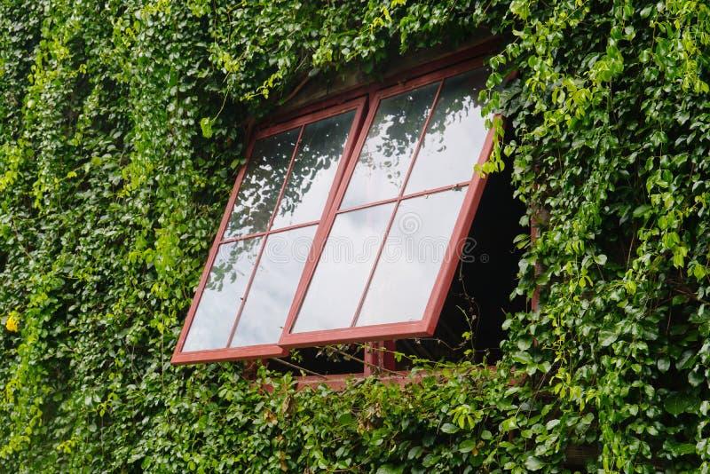 Außenfensterrebbaum bedeckt Gebäude lizenzfreie stockfotografie