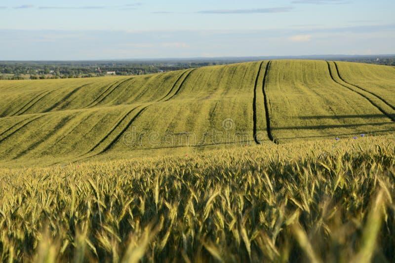 Außerhalb der Stadt - ländliche Landschaft - ein Feld lizenzfreies stockbild