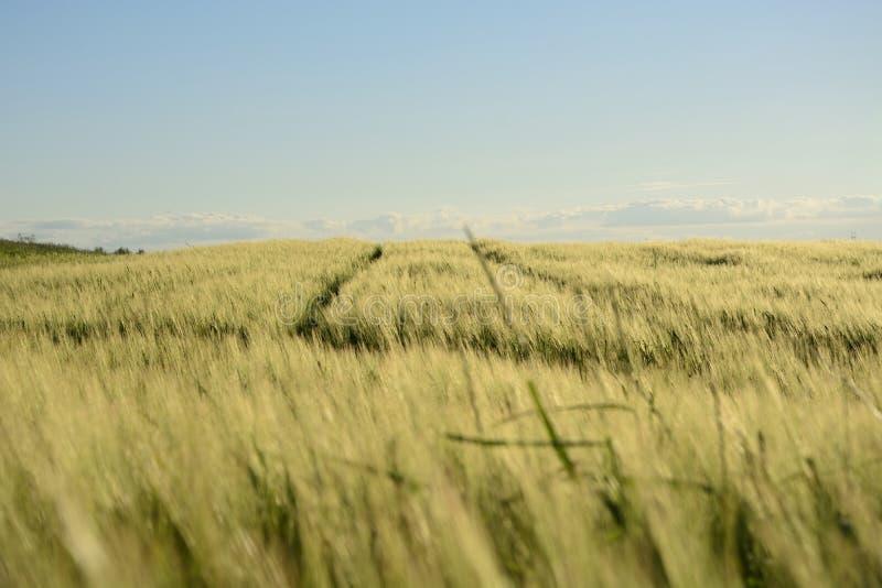 Außerhalb der Stadt - ländliche Landschaft - ein Feld lizenzfreie stockfotografie