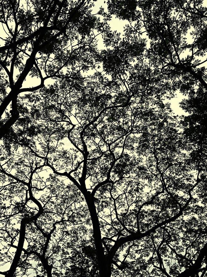 Au-dessous de la nuance d'arbre images libres de droits