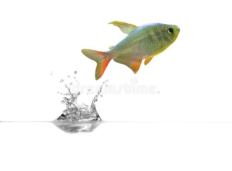 au-dessus de la petite eau transparente de poissons images stock