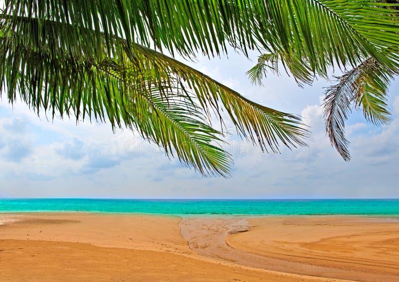 au-dessus des arbres de sable de paume images libres de droits