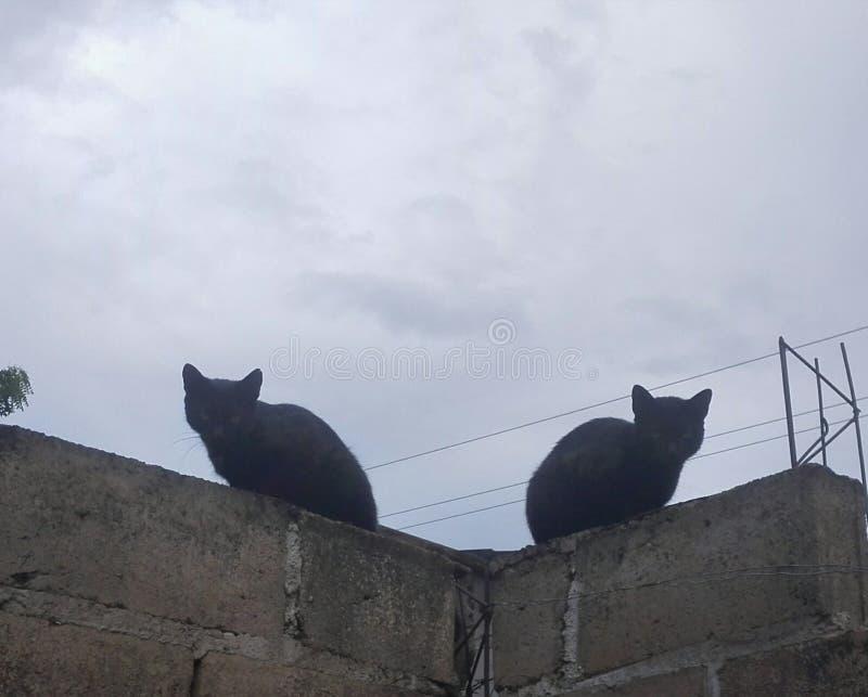 Au milieu de l'après-midi deux les chats noirs apparaissent photos libres de droits