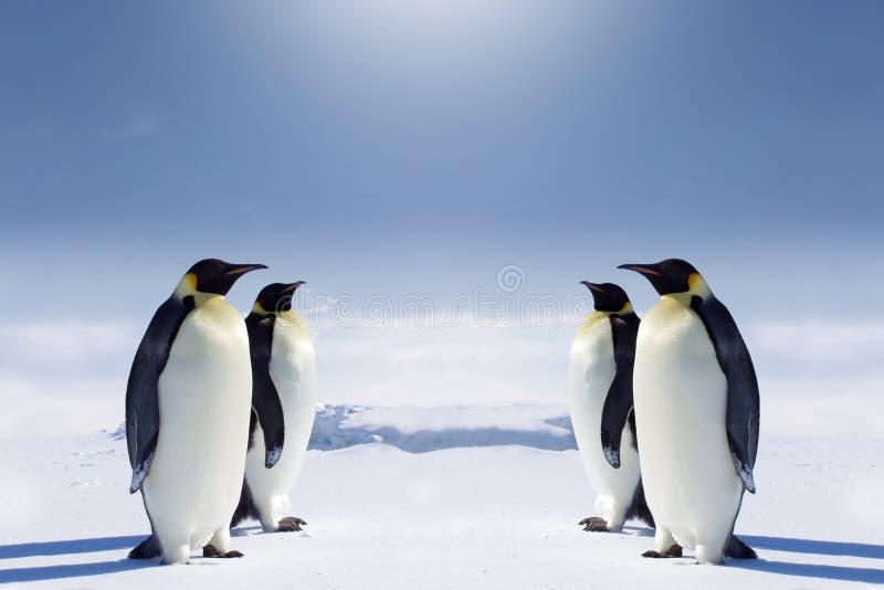 Au pôle du sud