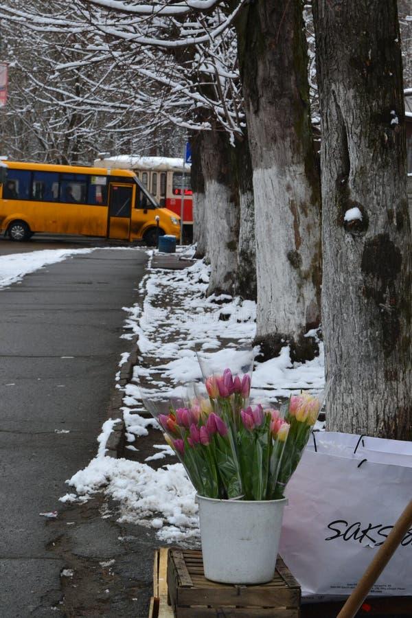Au revoir ressort de neige de tulipes d'hiver image libre de droits