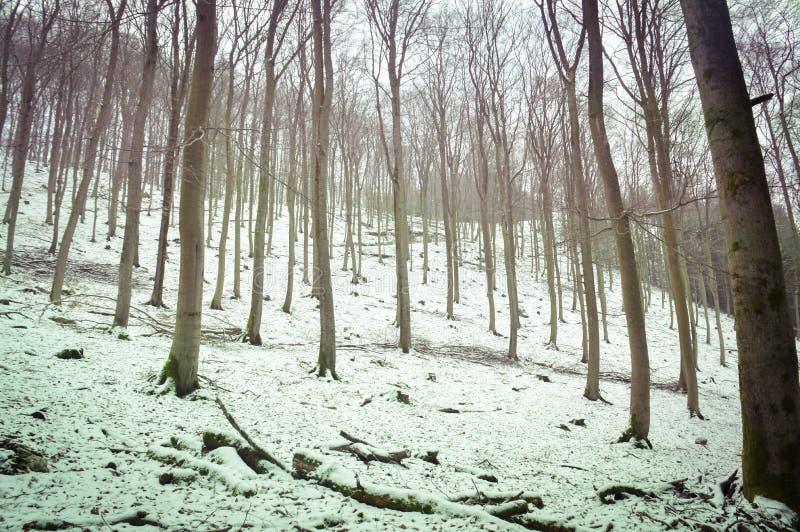 Au sol blanc de forêt à feuilles caduques de neige photographie stock libre de droits