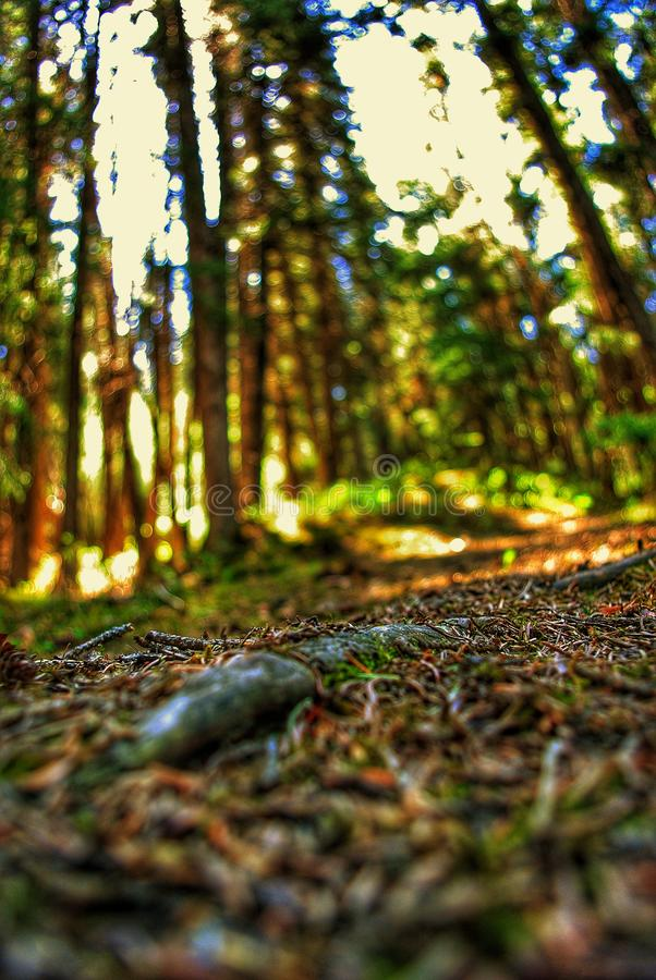 Au sol de Forrest photo libre de droits