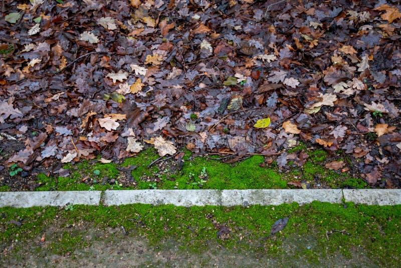 Au sol de Parkland avec la ligne droite de frontières en pierre photo libre de droits