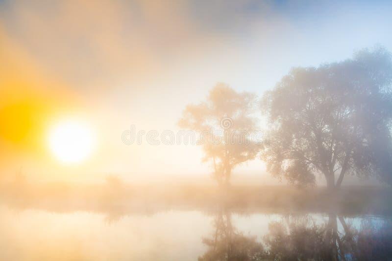 Aube brumeuse et silhouettes des arbres par une rivière photographie stock