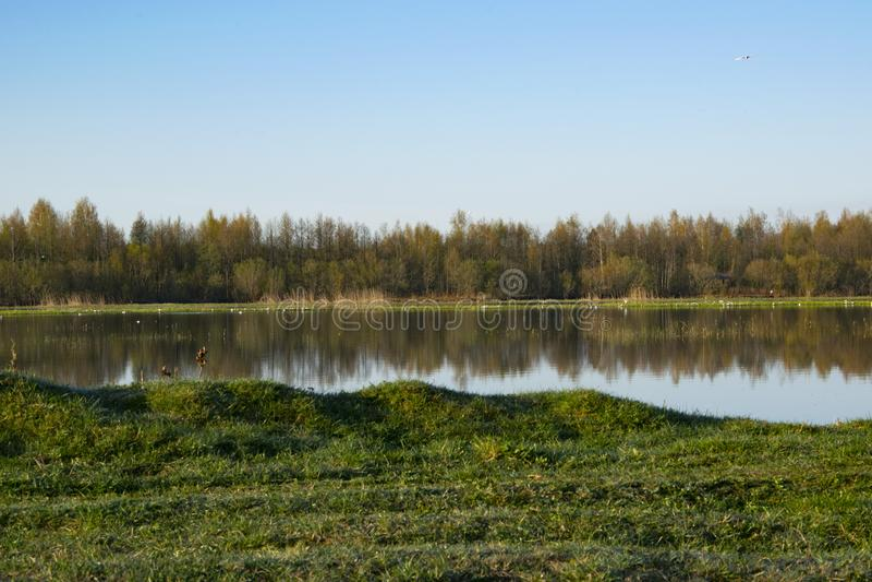 Aube de matin, ressort fleurissant, paysage photos libres de droits