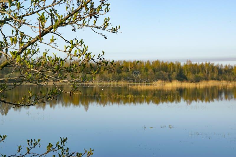 Aube de matin, ressort fleurissant, paysage image libre de droits