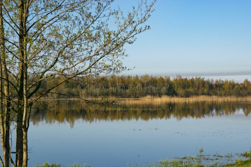 Aube de matin, ressort fleurissant, paysage photo libre de droits