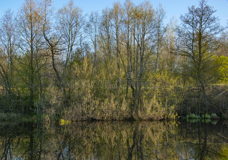 Aube de matin, ressort fleurissant, paysage image stock