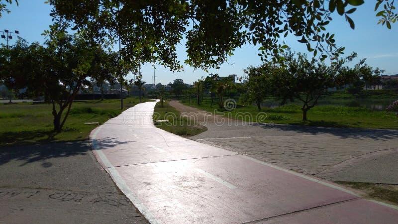 Aube en parc images stock