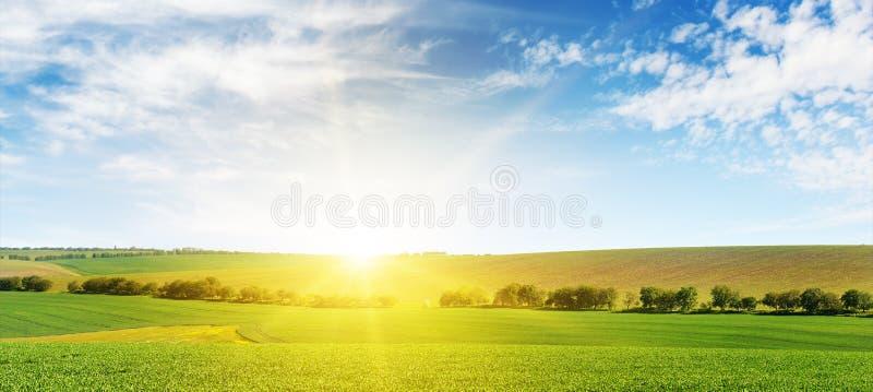 Aube lumineuse au-dessus de champ de maïs photos stock