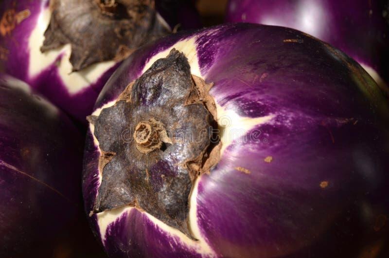 aubergine royalty-vrije stock foto