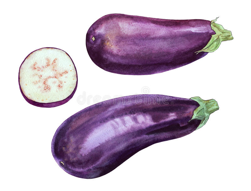 aubergine royaltyfri illustrationer