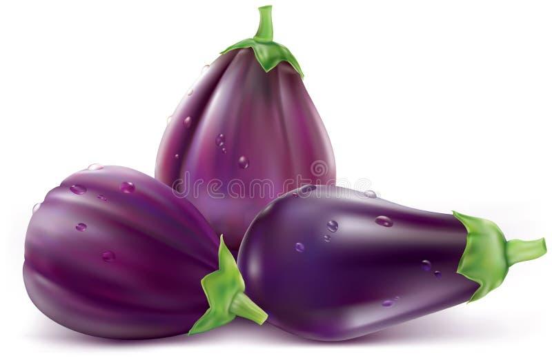 Aubergine, aubergine illustration stock