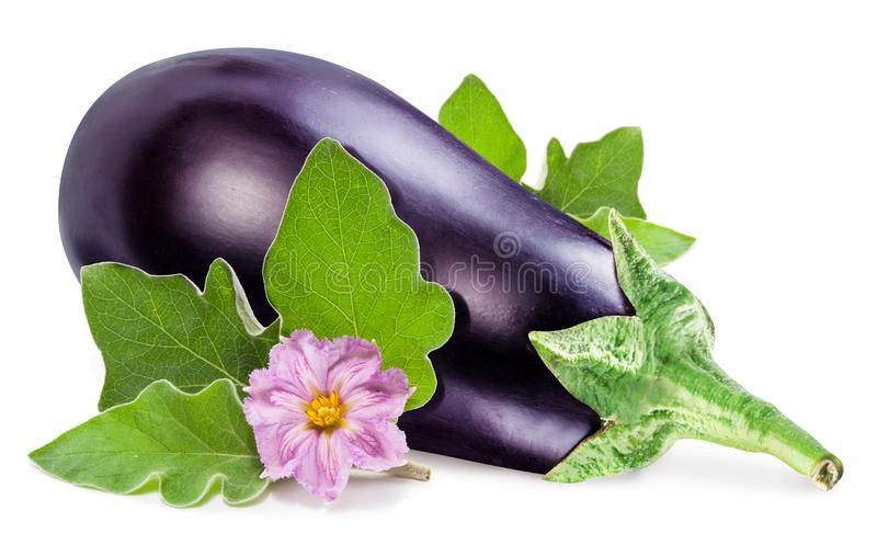 Aubergine or eggplant with aubergine flower and leaves on white background stock photography
