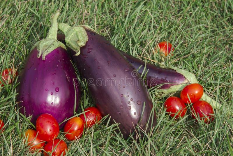 Aubergine och tomater arkivfoto