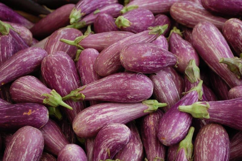 Aubergine sicilienne image stock
