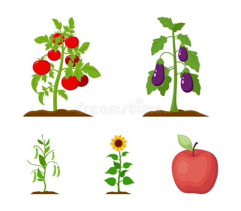 Aubergine, tomat, solros och ärtor Lagerför fastställda samlingssymboler för växt i symbol för tecknad filmstilvektor illustratio vektor illustrationer