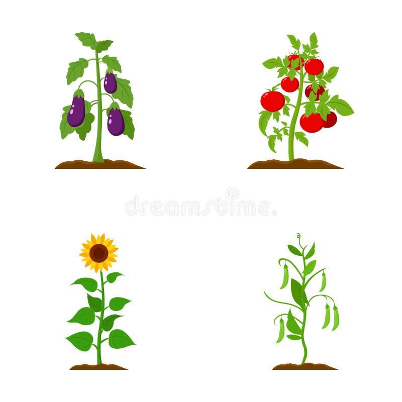 Aubergine, Tomate, Sonnenblume und Erbsen Betriebsvector gesetzte Sammlungsikonen in der Karikaturart Illustrationsnetz des Symbo lizenzfreie abbildung