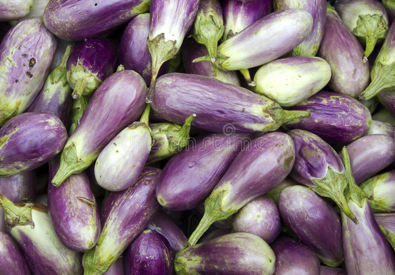 aubergines fotografia royalty free