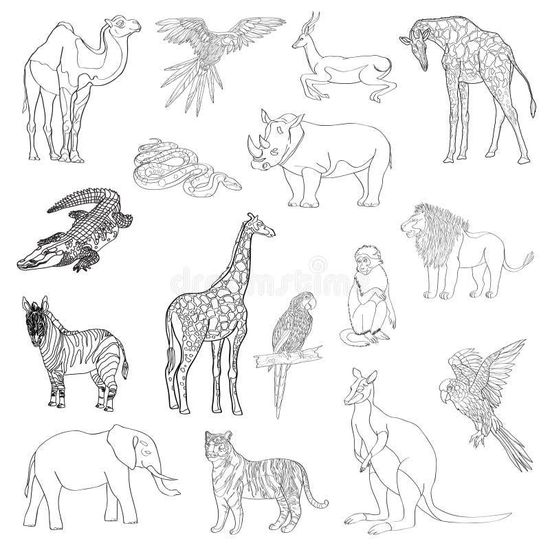 Auch im corel abgehobenen Betrag Satz Tiere, Papagei, Giraffe, Affe, Gazelle, Elefant, Nashorn, Känguru, Kamel, Löwe, Zebra, croc lizenzfreie abbildung