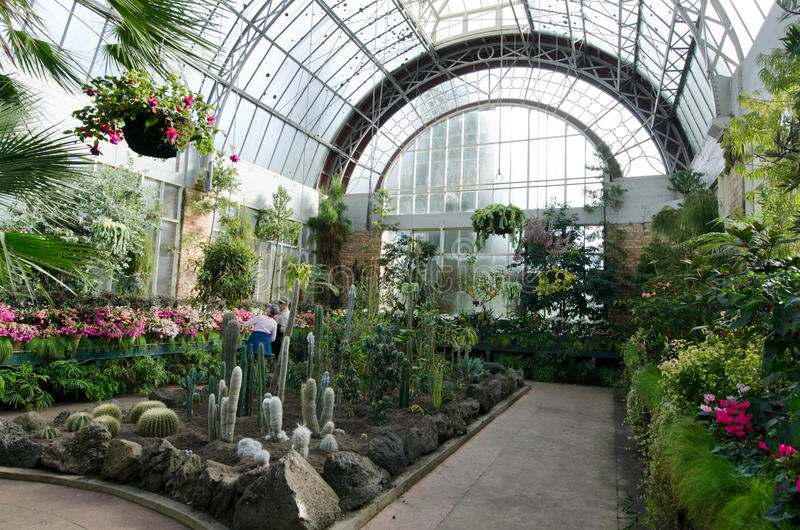 Plants at greenhouse stock photo  Image of glass, nursery