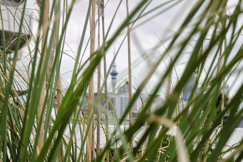 Auckland, New Zealand, 12.august 2010, view on Sky Tower from be stock image