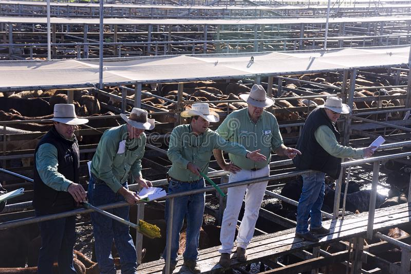 Auctioneers selling pens of beef cattle at Roma royalty free stock photography