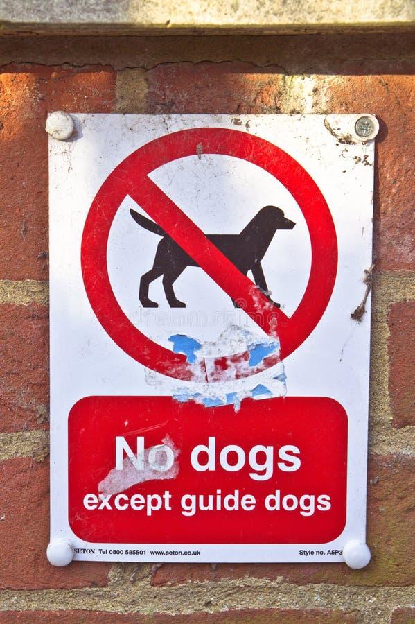 Aucun chiens photographie stock