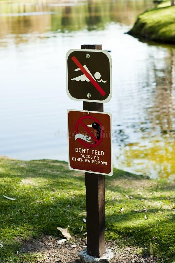 Aucune natation n'alimentent des canards photo libre de droits