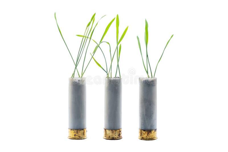 Aucune photo de concept de guerre Les pousses de l'herbe se développe hors du fusil de chasse de cartouche d'arme à feu Fond d'is photographie stock libre de droits