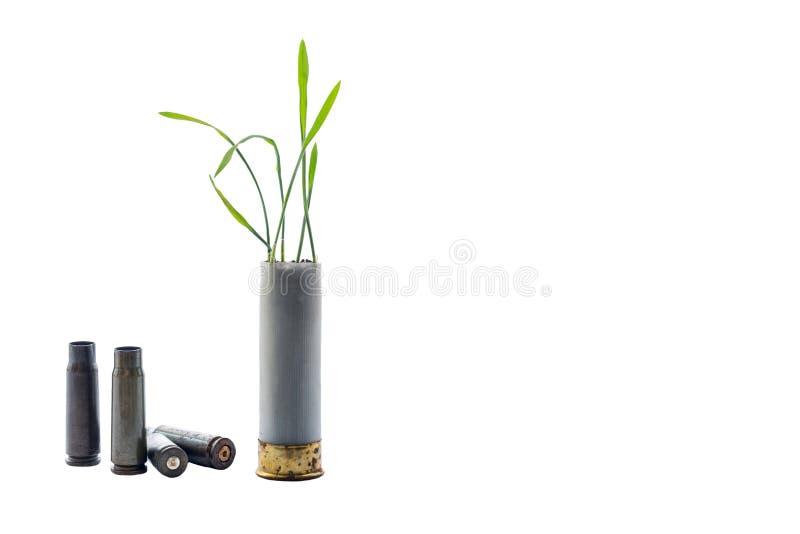 Aucune photo de concept de guerre Les pousses de l'herbe se développe hors du fusil de chasse de cartouche d'arme à feu Fond d'is photos stock