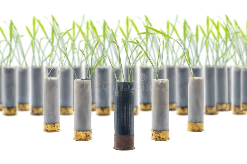 Aucune photo de concept de guerre Les pousses de l'herbe se développe hors du fusil de chasse de cartouche d'arme à feu Cartouche photographie stock libre de droits