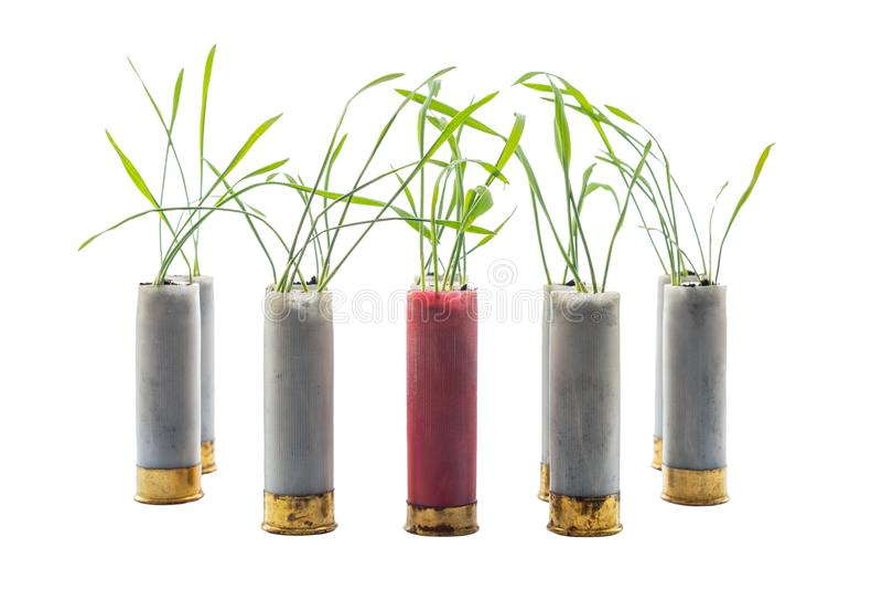 Aucune photo de concept de guerre Les pousses de l'herbe se développe hors du fusil de chasse de cartouche d'arme à feu Cartouche photos stock