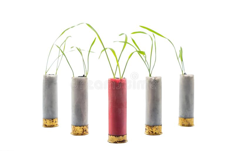 Aucune photo de concept de guerre Les pousses de l'herbe se développe hors du fusil de chasse de cartouche d'arme à feu Cartouche image libre de droits