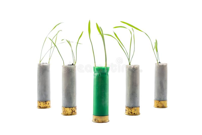 Aucune photo de concept de guerre Les pousses de l'herbe se développe hors du fusil de chasse de cartouche d'arme à feu Cartouche photos libres de droits