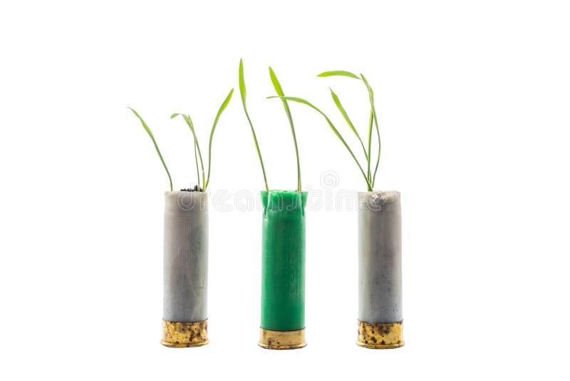 Aucune photo de concept de guerre Les pousses de l'herbe se développe hors du fusil de chasse de cartouche d'arme à feu Cartouche images libres de droits