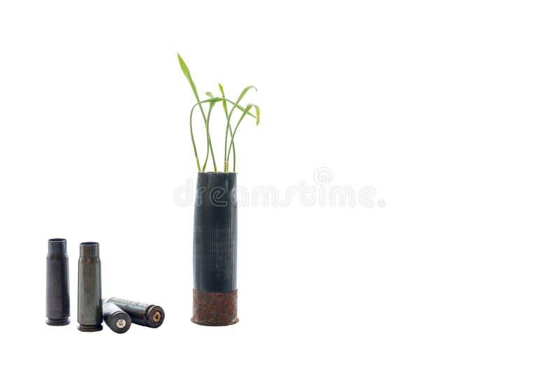Aucune photo de concept de guerre Les pousses de l'herbe se développe hors du fusil de chasse noir de cartouche d'arme à feu Fond photographie stock